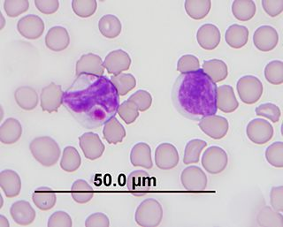 Kurloff cell Cells found in the blood and organs of guinea pigs and capybara