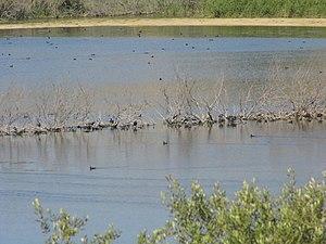 Línea de tarajes en la Laguna Salada de Zorrilla.JPG