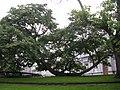 LIEGE Jardin Botanique (3).jpg