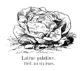 Laitue palatine Vilmorin-Andrieux 1904.png