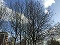 Lambeth, London, UK - panoramio (77).jpg
