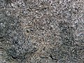 Lamprophyre (Dubreuilville Dike, Archean; Route 17 roadcut southeast of Princess Lake & north of Wawa, Ontario, Canada) 6 (48312377912).jpg