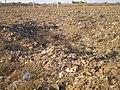 Landfill area - Aire d'enfouissement (3267264672).jpg