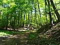 Landschaftsschutzgebiet Gestorfer Lößhügel (13).JPG