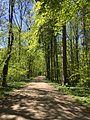 Landschaftsschutzgebiet Isarauen, München.jpg