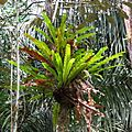 Last Graceful Fern Picture - Flickr - treegrow.jpg