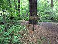 Laurel Hill State Park Hemlock Natural Area.JPG