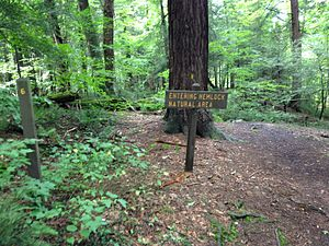 Laurel Hill State Park - Entry to the virgin forest at Laurel Hill