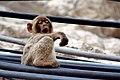 Lazy day in gibraltar - Flickr - jonrawlinson.jpg