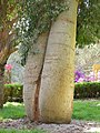 Le jardin botanique d'Aswan - panoramio - youssef alam (1).jpg