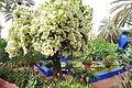 Le jardin des majorelle 30.JPG