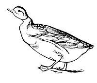 Lear 2 - Goose.jpg