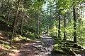 Les Houches - trail.jpg