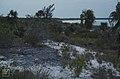 Lithified crest. Middle dune ridge. West Bay (24005121737).jpg