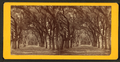 Live Oak Avenue, Bonaventure Cemetery, Savannah, Ga, from Robert N. Dennis collection of stereoscopic views 5.png