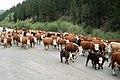 Livestock25.tif (25003317318).jpg