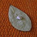 Llipta on coca leaf.jpeg