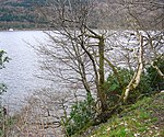 Loch Shira Wooded shoreline of Loch Shira, a bay off Loch Fyne.