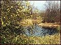 London Wetland Centre. - panoramio.jpg