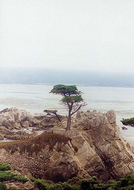 Lonelycypress3.jpg