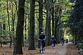 Lots of tourists biking through the leaves under mighty oaks at National Park Hoge Veluwe sunday 2 November 2014 with 16 degrees - panoramio.jpg