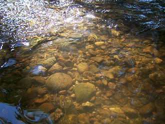 Stream bed - A stream bed armored with rocks