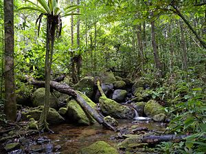 Lush rainforest vegetation surrounding a creek