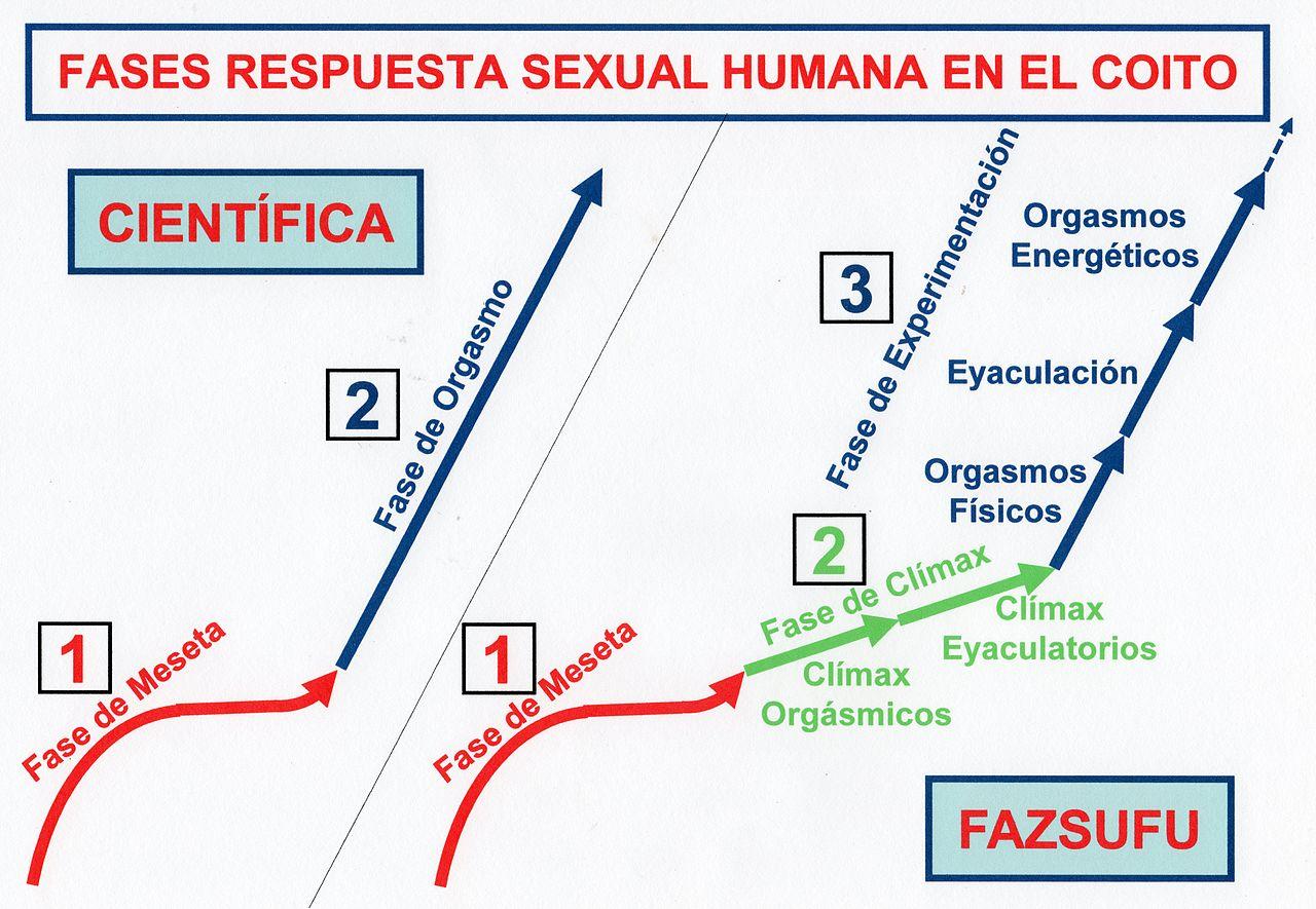 Respuesta sexual humana dini