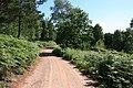 MOD track - geograph.org.uk - 1334259.jpg