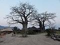 Machinga, Malawi - panoramio (1).jpg
