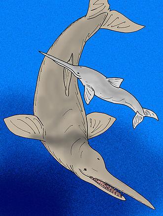 Macrodelphinus - Macrodelphinus and Eurhinodelphis.