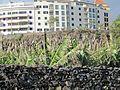 Madeira em Abril de 2011 IMG 1621 (5661429965).jpg