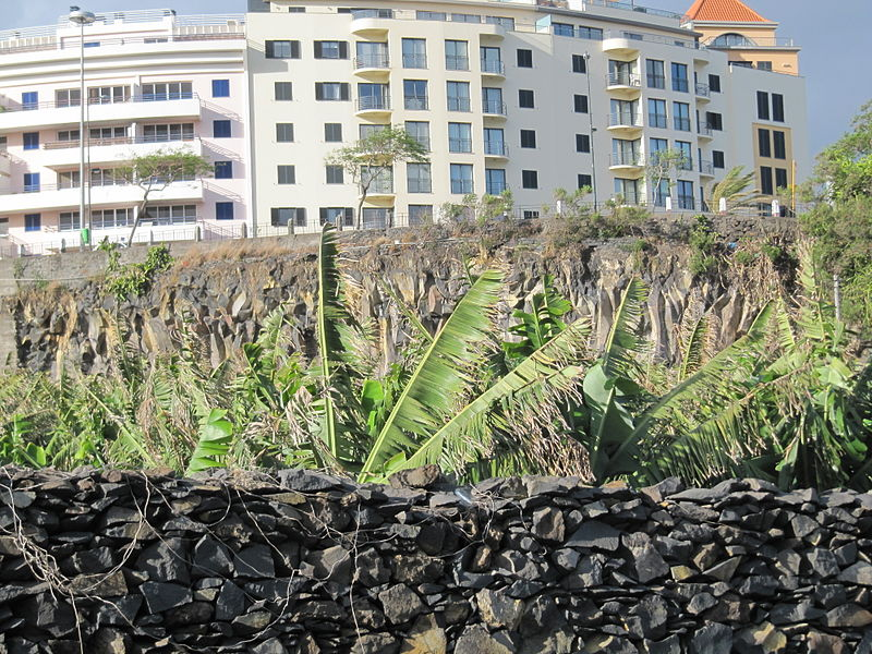 File:Madeira em Abril de 2011 IMG 1621 (5661429965).jpg