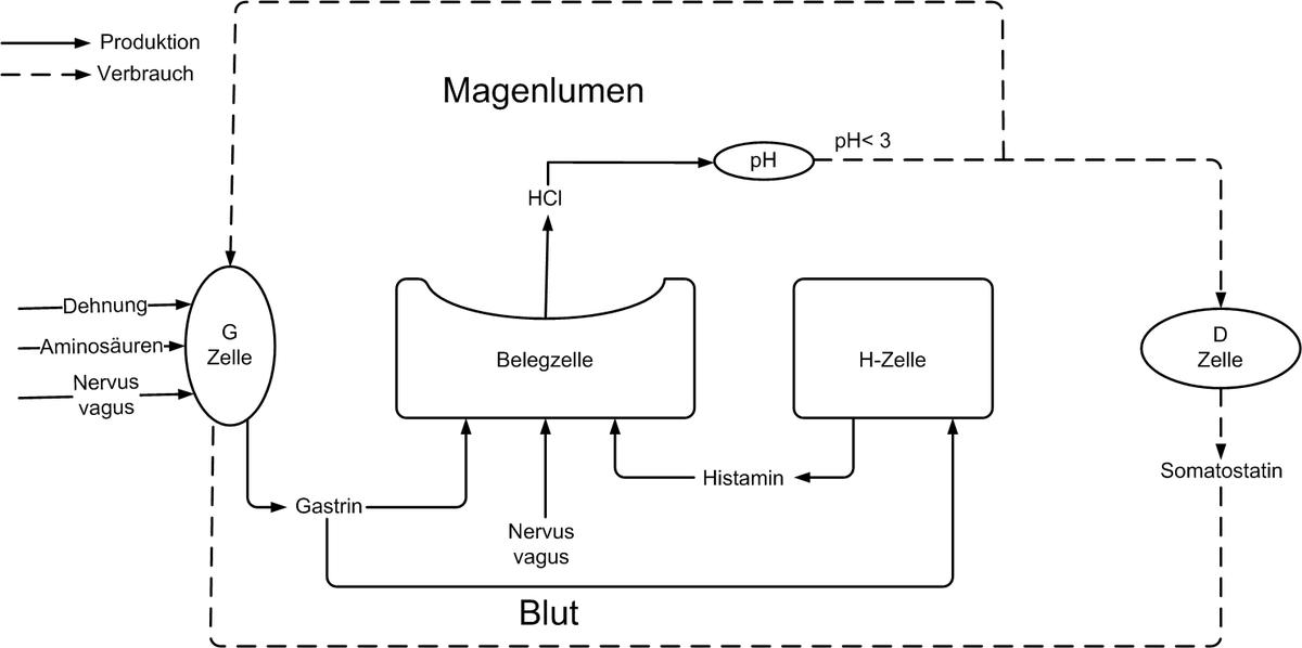 Magensaft – Wikipedia