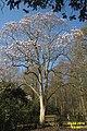 Magnolia (SG) (25688347414).jpg