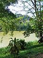 Mahaweli-Jardin botanique de Kandy (3).jpg
