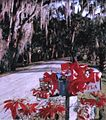 Mailbox full of presents- Myakka Park, Florida (8280138971).jpg