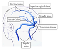 Major venous sinuses and their tributaries.png