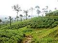 Malakkapara - panoramio (2).jpg