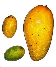 قائمة الفواكه 220px-Mangoes-left