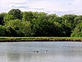 Matching Pond fishing lake at Matching, Essex, England.jpg