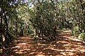 Matheran - panoramio (12).jpg