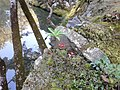 Matsuojingatanicho, Nishikyo Ward, Kyoto, Kyoto Prefecture 615-8286, Japan - panoramio (2).jpg
