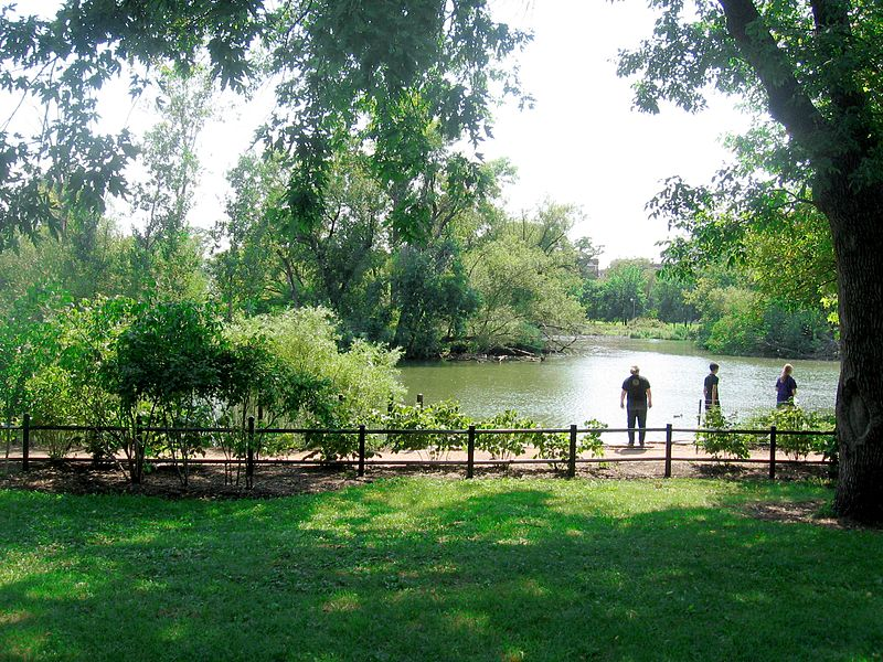 File:McKinley Park lagoon, Chicago-feeding ducks.JPG