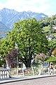 Merano ippocastano sulle Passeggiata Lungo Passirio, vicino Ponte della Posta visto dal sud-est.jpg