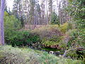 Metolius River source.JPG