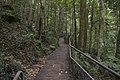 Minnamurra Rainforest - panoramio (16).jpg