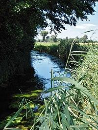 Moosgraben (Donau) 3.jpg