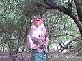 Mother monkey's instinct.jpg