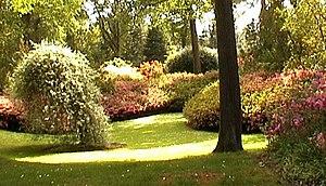 Kilmeadan - Mount Congreve woodland garden